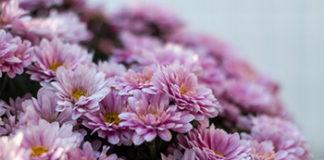 cvijece groblje