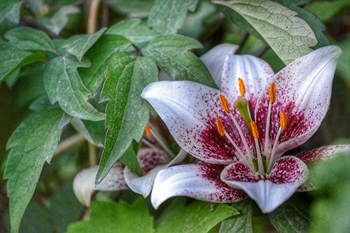 cvijece groblje1