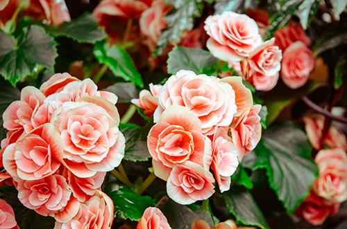 cvijece groblje3