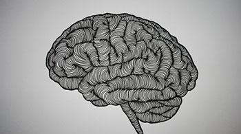 musko zenski mozak