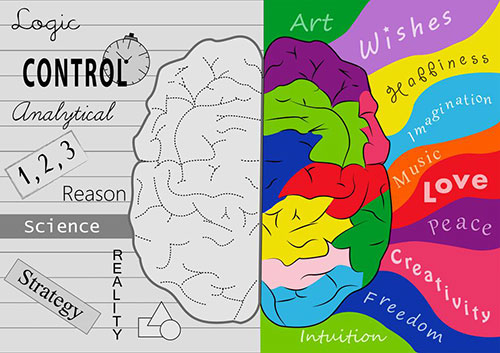 strana mozga1