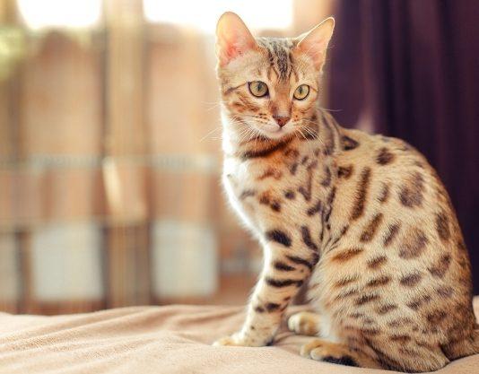 mackanaj
